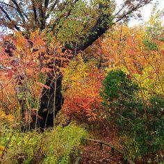 Fall colors. Happy November! #vsco #nature #fall #potd