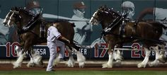 Boston Red Sox starting pitcher Jon Lester stretches as the Budweiser Clydesdales round the field before Game 5 of baseball's World Series against the St. Louis Cardinals Monday, Oct. 28, 2013, in St. Louis. (AP Photo/David J. Phillip)