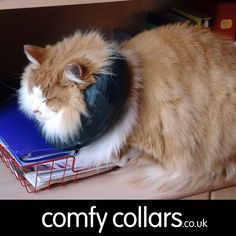 "Heldig wearing his Comfy Collar Size 2... ""Heldig is a Norwegian Forest Cat, 7.3kg rescue, who experienced a life threatening depression wearing an e-collar. The Comfy Collar allowed Heldig to move around easily, and still drink and eat okay. It stopped him from bothering a huge wound on his rear, even though he is a very long cat."" ...by June"