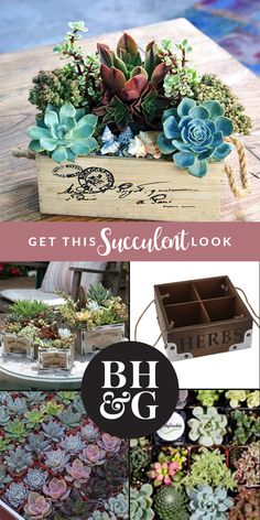 Add a bit of rustic charm to your home with these easy-to-care-for succulents. Build your own gorgeous DIY succulent gardens with these useful hints and tips.