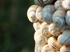 Tiny Snails by abdullahkaratas on DeviantArt