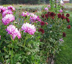 How to Grow Dahlias - Overwintering Dahlias | Gardener's Supply