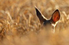 design-dautore.com: Alan Mackenzie photography