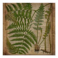 de vintage botanische druk verlaat patroonvaren poster