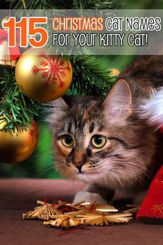 Did you get a kitty cat for Christmas? Just remember that a cat is a pet for all year around. Here are a list of the best Christmas cat names for you to choose. Christmas Names, Christmas Kitty, Cat Lover Gifts, Cat Lovers, Girl Cat Names, Fisher Cat, Cat Whisperer, F2 Savannah Cat, Cat Stands