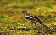 Pasari Prada Romania | MIT Hillel Drupal, Romania, Prada, Birds, Animals, Animales, Animaux, Bird, Animal