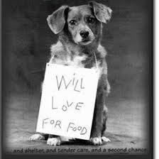 save as many animals as i possibly can. especially dogs.