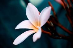 Awesome White Flower Close Up HD Wallpaper