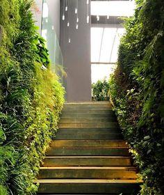 A escada cercada de beleza por todos os lados. The stairs surrounded by beauty#vicmeirelles #vicmeirellesoficial #verdevertical #jardimvertical #talitagutierrez #paredeverde #arquitetura #arquiteturaverde #paisagismo #sustentabilidade #greenview #verticalgarden #landscapearchitecture #greenarchitecture #sustainability #gogreen by verdeverticalbrasil http://ift.tt/1OBBZGy