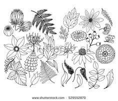 Set of plant and floral elements, doodle illustration