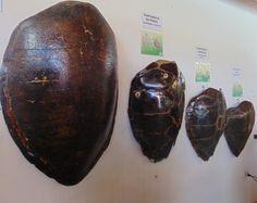 ONG Ecoassociados e as tartarugas marinhas em Porto de Galinhas