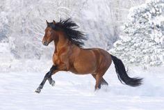 Beautiful Horses Pretty Horses Majestic Horse Horse Love Animals Beautiful