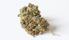 All the news about the industry of cannabis and medical marijuana. Information on the best strains of marijuana and cannabis events. Buy Cannabis Online, Buy Weed Online, Online Buying, Medical Marijuana, Ways To Stop Smoking, Cbd Oil For Sale, Edibles Online, Cannabis Oil, Cannabis Shop