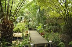 Tropical Garden, Bespoke, Landscaping, London, Architecture, Plants, House, Taylormade, Arquitetura