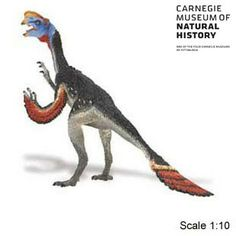Carnegie Collectible Oviraptor Dinosaur Toy Model $9.99 in stock & fast same day shipping! Shop www.DinosaurToysSuperstore.com