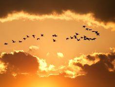Limitations – A Poem by Julie Clark