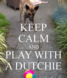 Keep calm and look at Wiebe! The greatest Dutch Shepherd <3 --YES my thoughts exactly!!