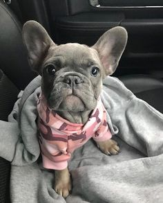 Frenchie World® Camouflage Hoodie