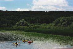 Barton Nature Preserve: Ann Arbor, MI - a lovely place to kayak. Kayak Paddle, Ann Arbor, Rowing, Preserve, Kayaking, Michigan, Sailing, Wanderlust, River
