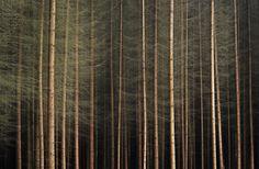 Deep forest by Adrienn Balaskó on 500px