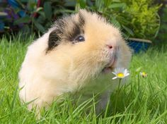 This piggie who just discovered how delicious flowers smell. | 41 Pictures For When Life Just Sucks