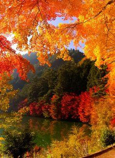 """coiour-my-world: """"  Gate to Autumn ~ Lake Inagakko, Yamanashi, Japan """" CUTHIGHANDTIGHTGROWER-FOLLOW FOR OVER 200000 POSTS OF-CUT DICKS-GOOD LOOKS -MUSCLES"""