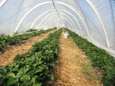 Welcome - HighTunnels.org  A site dedicated to information regarding high tunnel use.. four season growing, three season growing .. using high tunnels. Unheated (unheated greenhouses)