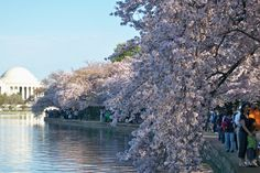 10 Free & Fun Things to Do in DC This Spring