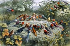 Richard Doyle - A Rehearsal in Fairy Land, illustration from 'In Fairyland: A Series of Pictures from the Elf-World' Framed Art Prints, Painting Prints, Richard Doyle, Fairy Paintings, Fantasy Paintings, Poster Online, Watercolor On Wood, Illustration, Art Graphique