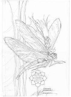 Free Jody Bergsma Coloring Pages   ... & Mermaid Blog: Free Fairy & Mermaid Coloring Pages by Jody Bergsma