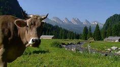 Real Switzerland Summer in HD #Toggenburg Beautiful!