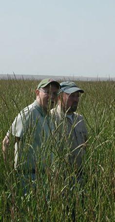 Tall wheatgrass as energy crop in Hungary