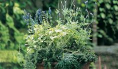 Scented herb pot