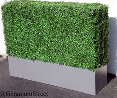 4'x3' hedge panel in a steel planter with stormy eggshell paint.