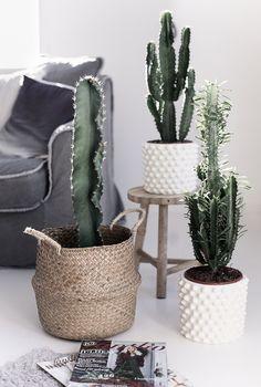 New Plants Desing Interior Cactus Ideas