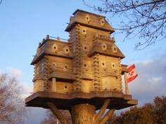 OH CANADA  Bird House Ideas http://socialaffiliate.wix.com/bird-houses http://buildbirdhouses.blogspot.ca/