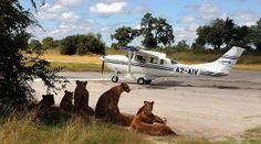 Avioneta Okavango