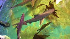 A NY man was convicted of shark trafficking after authorities found live sharks in an above-ground pool in his backyard. Above Ground Pool, In Ground Pools, Sandbar Shark, Mc Eiht, Latrell Sprewell, Leopard Shark, Joyner Lucas, Protected Species, Basement Pool