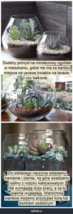 Mini ogrody - Świetny pomysł na miniaturowy ogródek w mieszkaniu, gdzie nie ma za bardzo miejsca na uprawę kwiatów na tarasie, czy balkonie. Do szklanego naczynia wkładamy kamienie i ziemię, na górę wsadzamy rośliny z rodziny kaktusowatych. Nie wymagają dużo pracy, a za to pięknie wyglądają. Wierzchnią warstwę możemy przysypać korą lub żwirkiem ozdobnym.