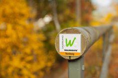Markierung der Waldroute kurz vor der Staumauer am Diemelsee. Die Wald-Route geht von Iserlohn nach Marsberg und führt auf ihrer Gesamtlänge von 240 km auch am Diemelsee entlang.