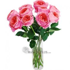 Pink Antique garden roses are making a big time come back. Larger and fancier with a sweeter perfume, garden roses are the rose lover's first choice Garden Roses Wedding, Wedding Flowers, Bulk Roses, Ranunculus, All The Colors, Glass Vase, Perfume, Big Time, Antiques