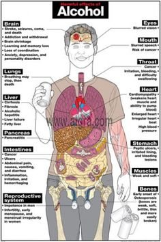 The Harmful Effects of Alcohol Poster explains the long-term harmful effects alcohol has on the human body. It provides detailed anatomical illustrations to show the damage alcohol can have on vital organs, such as brain damage, heart disease and liver cirrhosis. This poster is a great tool designed to education people of the effects of alcohol.
