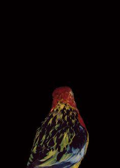 Bad Birds #1 by Lynne Roberts Goodwin