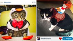 Funny Halloween Cat Costumes (and one angry cat!) http://ihavecat.com/2014/10/31/happy-all-hallows-eve  #cats #halloween #halloweencostumes #catsincostume #halloweencats #thegodfathercat #godfather #Thegodfather #petco #makeascene #petcomakeascene #catcostumes #angrycat @petco