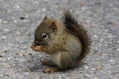 squirrel spirit guide - Google Search