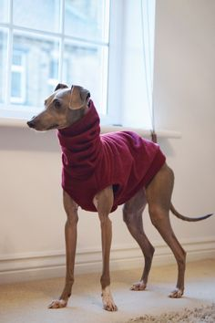 Sleeveless vest by LOKO Pet Apparel. http://lokopetapparel.com/product/sleeveless-vests/