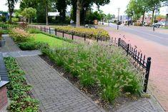 10 siergrassen soorten voor méér rust en eenvoud in de tuin Ornamental Grasses, Jacuzzi, Sidewalk, Garden, Life, Outdoor, Mei, Balcony, Outdoors