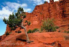 Sedona, Arizona photograph- Original Landscape Photography, Tree against Orange Red Rocks, Vivid- 5x7
