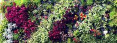 O WallGreen é um sistema modular desenvolvido para a instalação de Jardins Verticais que forma nichos sequenciais para acomodar plantas ornamentais em paredes montando belíssimos jardins ou ainda em estruturas metálicas formando muros vegetados.