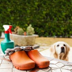 ASPCA Guide to Pet-Safe Gardening